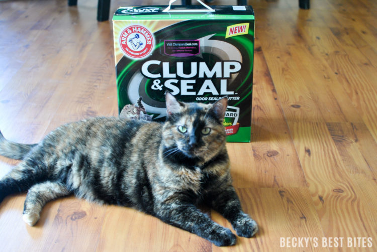 Happier Home with ARM & HAMMER™ Clump & Seal™ MicroGuard™ Cat Litter | beckysbestbites.com